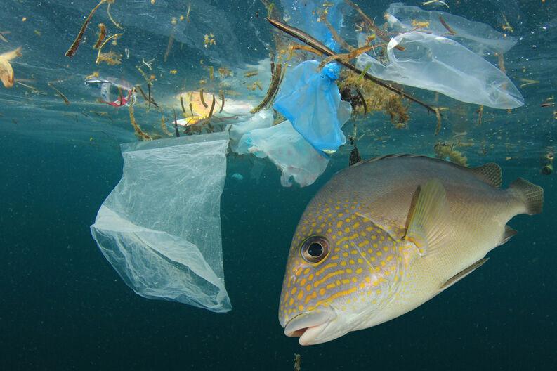 contaminacion-oceano-pez.jpg